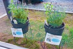 縄井先生(理学療法学科・教授)の研究の一環として「園芸療法体験」を行いました