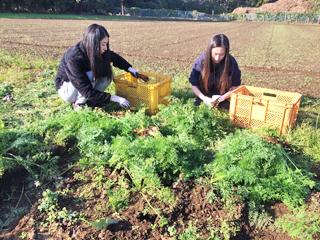 看護サークルTMNは『第24回霞祭』でヨリアイ農場さんのサポートのもと、新鮮野菜を販売します